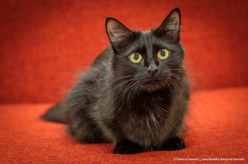 котэ кошка животные pavelpanko