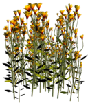 Lug_Grass_Flower (30).png