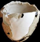EasterOnTheFarm_Element01 (25).png