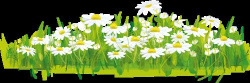 травка-цветы.png