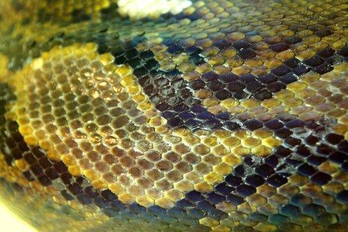 Альбом пользователя KateKostina: Текстура. Цветная змеиная шкура.