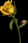 goldenrose2 copy.png