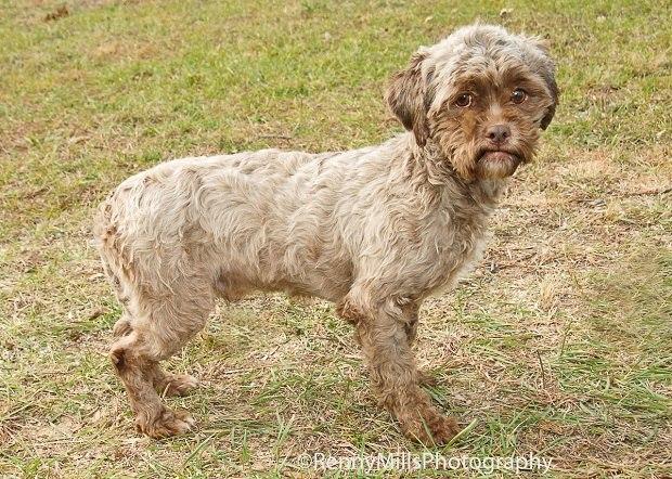 собака с лицом как у человека