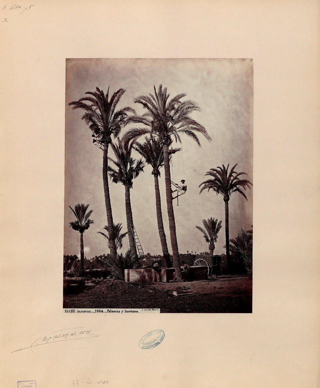 Аликанте. Пальмовая роща и ее обитатели