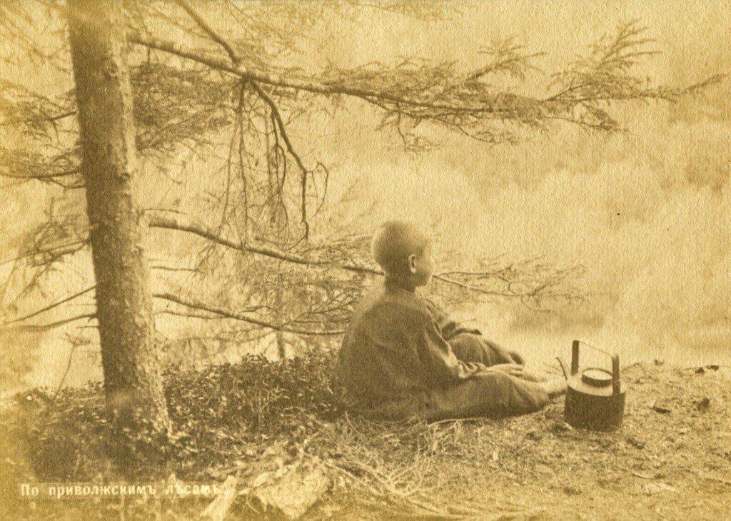 По приволжским лесам