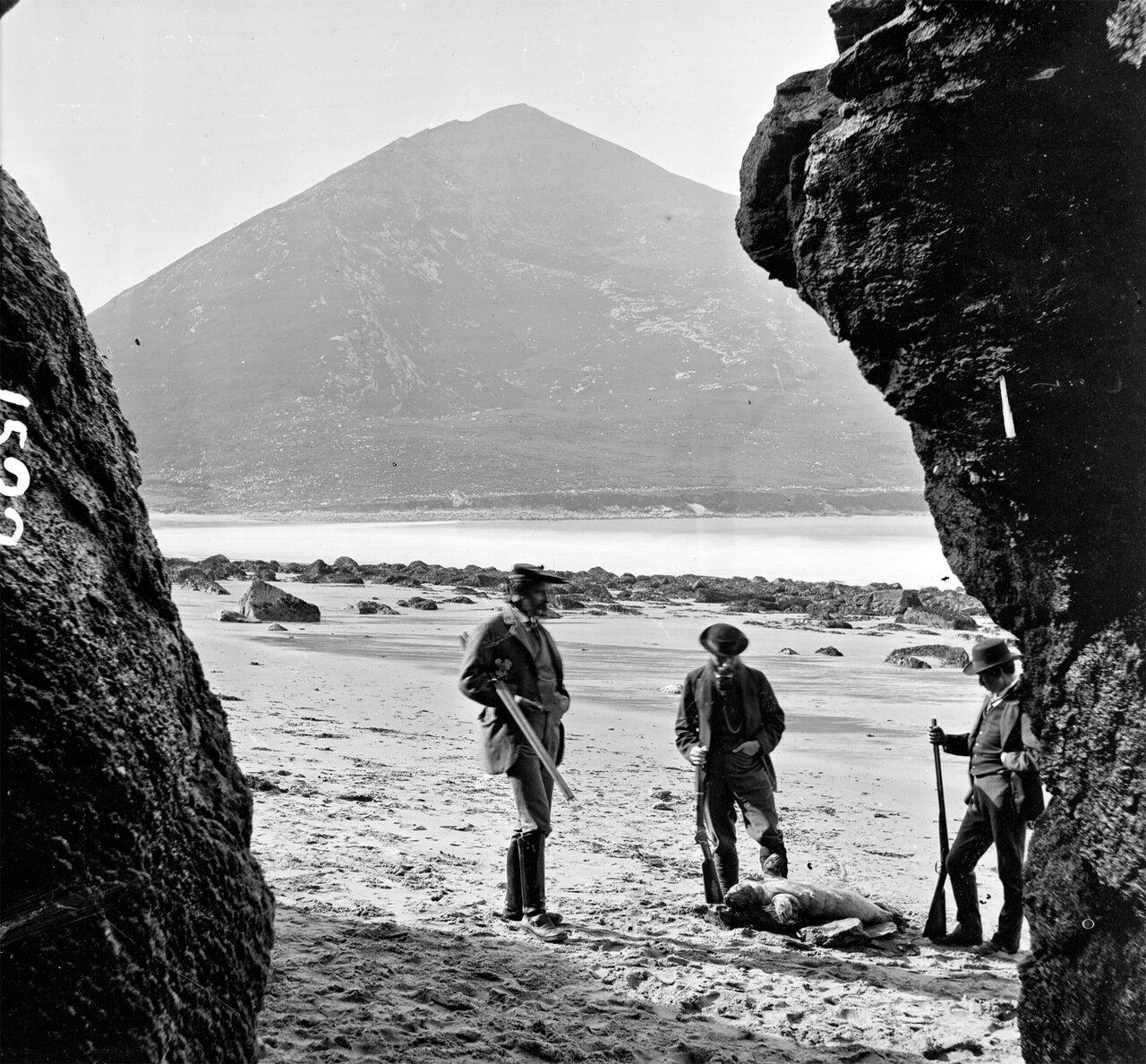 Охота на острове Ахилла в графстве Майо. 1870-е.