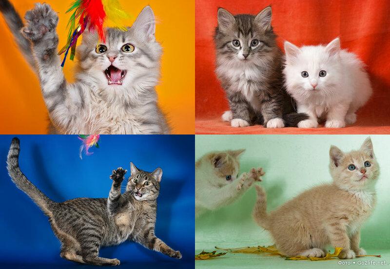 Просто замечательные красивые кошки