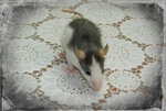 Декоративная крыска