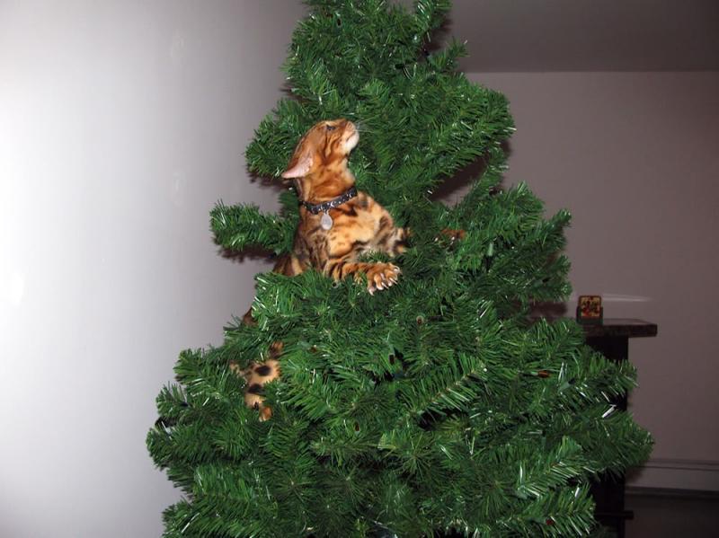 Коты на ёлке - фото 24