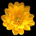 feli_gs_flower5.png