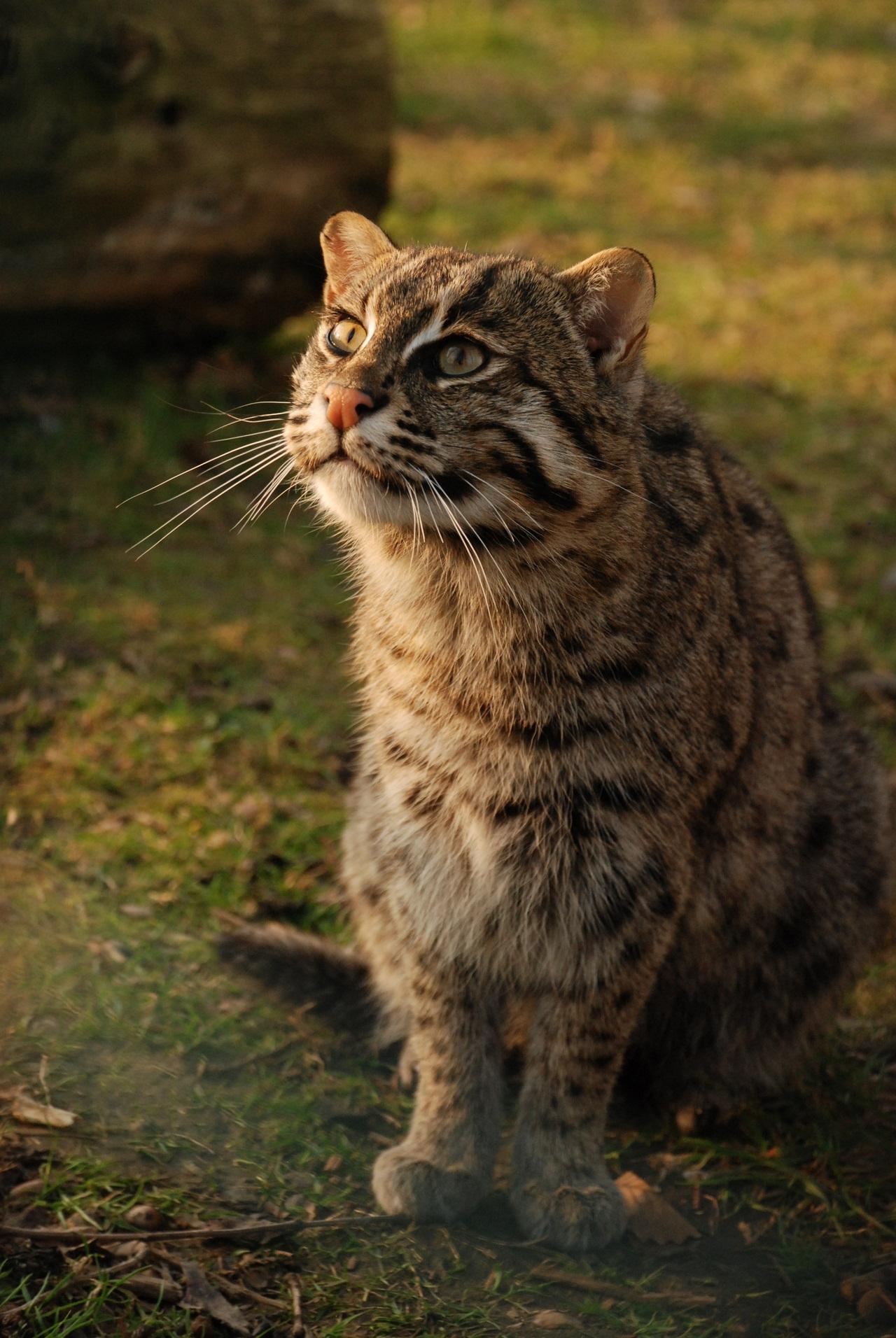 Рыбные коты что радует кошки рыболовы