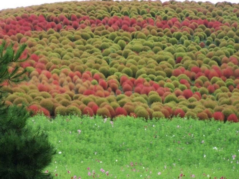 Живописный японский парк Хитати Кайхин 0 1422da 7b12f5e4 orig