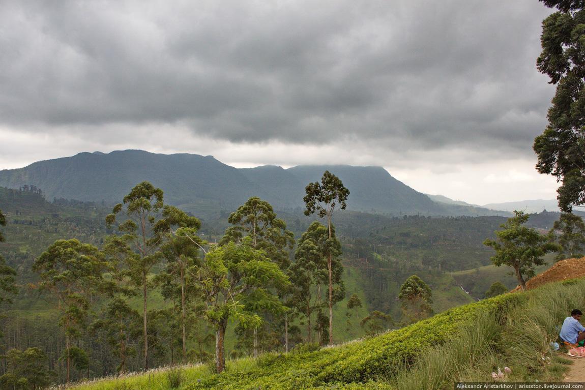 Шри-Ланка_Пик Адама_17