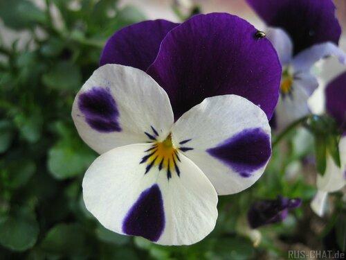 Полюбим цветы, красота от Бога