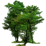 forest chats (5).png