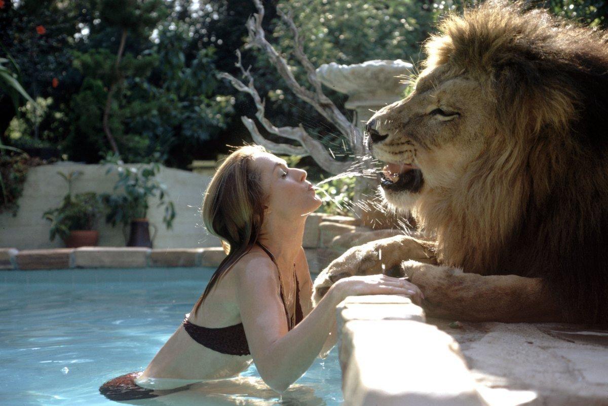 В 1970-е годы Типпи Хедрен шокировала общественность тем, что у нее в доме жил взрослый самец льва,