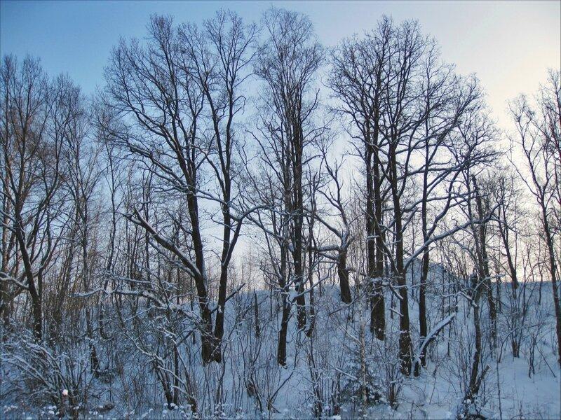 Деревья на склоне холма