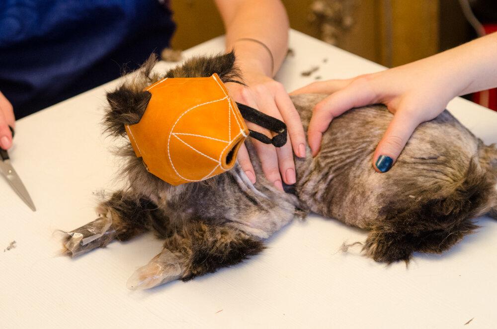 Как подстричь кота в домашних условиях самому 126