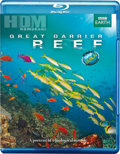 Большой барьерный риф. 3 На рифе и за его пределами
