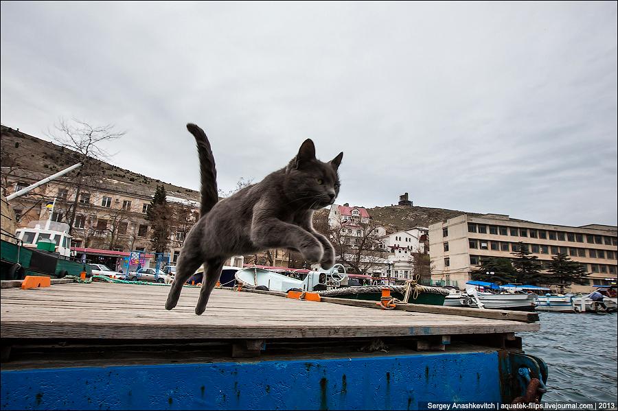 Летающие коты Балаклавы