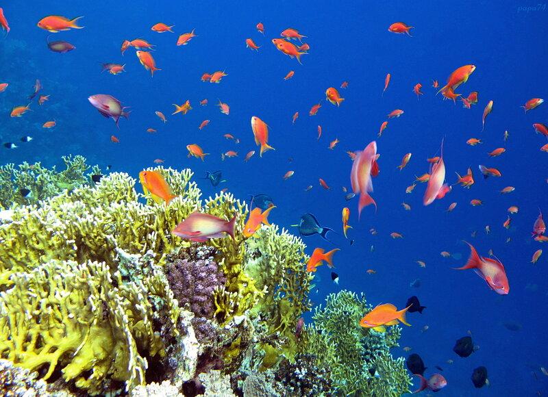 Подводные фото. Эль-Кусейр, Красное море