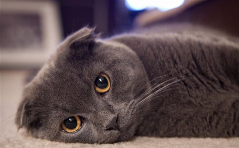 http://cat.mau.ru/sfs/