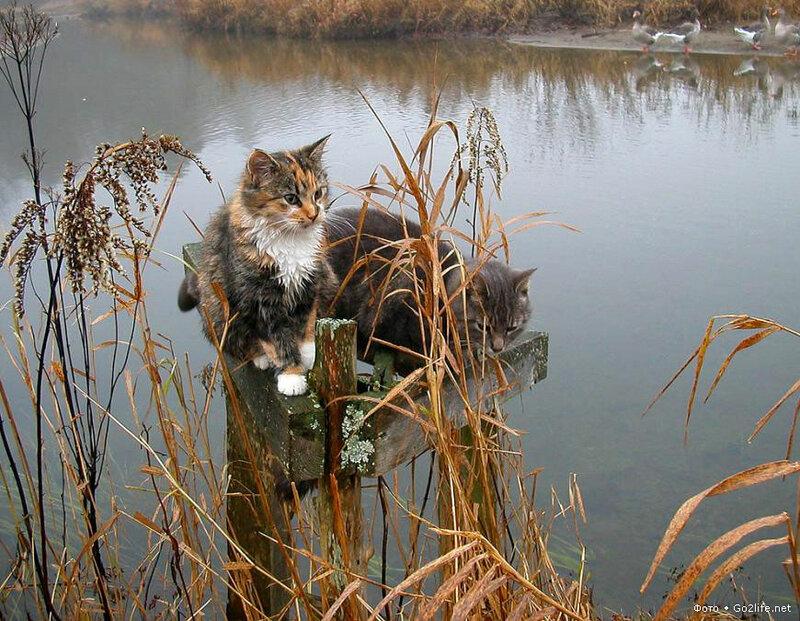 кот и рыбалка картинки для грамотно