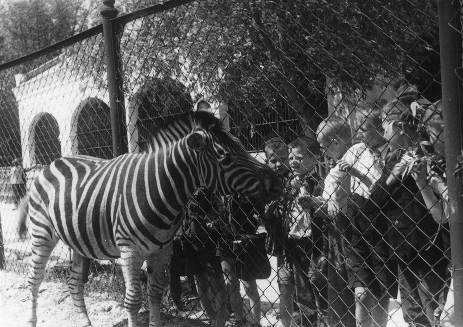 1947.05.16. Дети у клетки зебр в киевском зоопарке