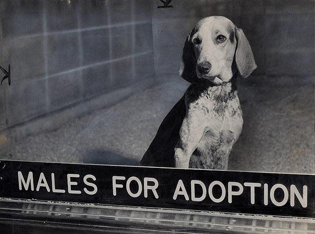 A sad-eyed dog awaits adoption before viewers at the ASPCA headquarters.