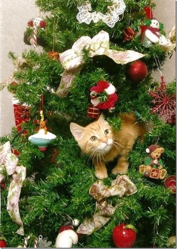 Коты на ёлке - фото 44
