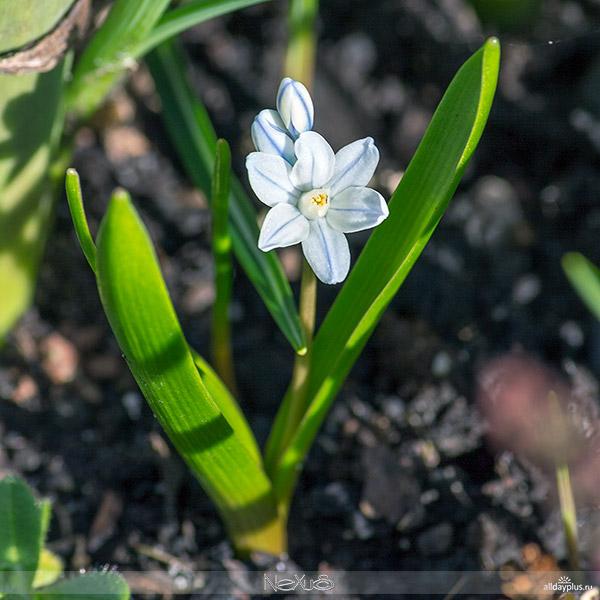 Я люблю все цветы, часть 35