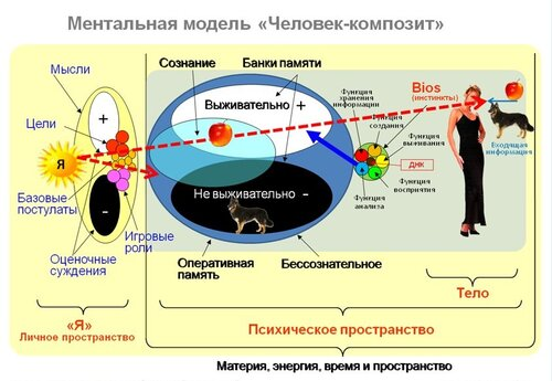схема человека