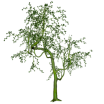 GC_EF_tree_3.png