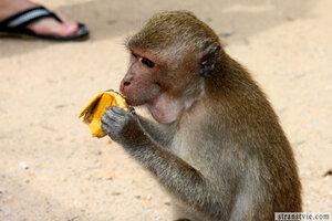 Краби, где много-много диких обезьян
