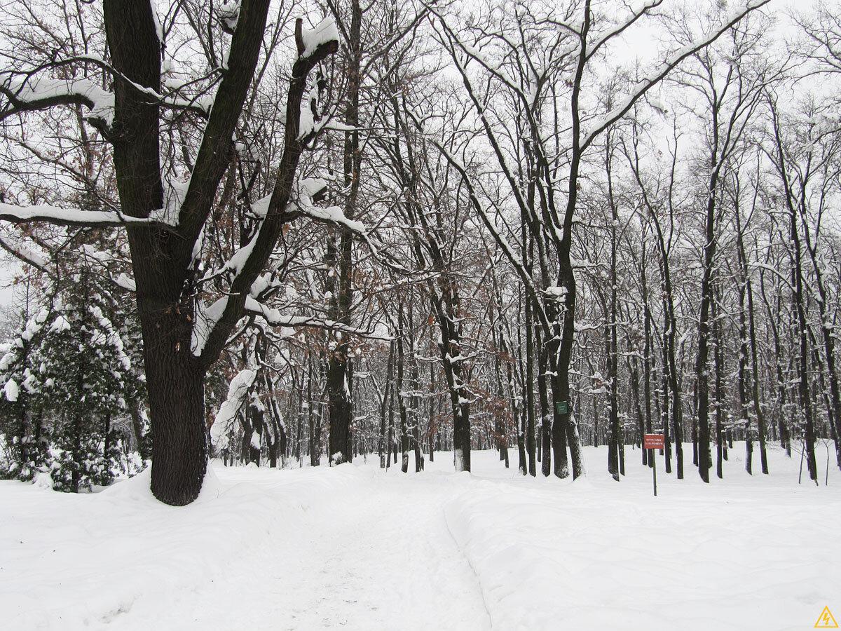 Голосеевский парк (Декабрь 2012)