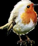 ldavi-feathersandmittens-littlerobin2.png