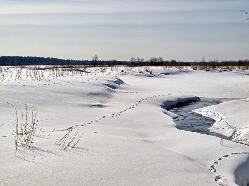 Зимний ручей и цепочки следов в Заречном