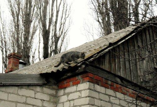 На тропе кошачьей