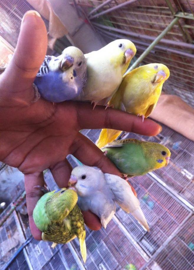 Хочу попугайчика...