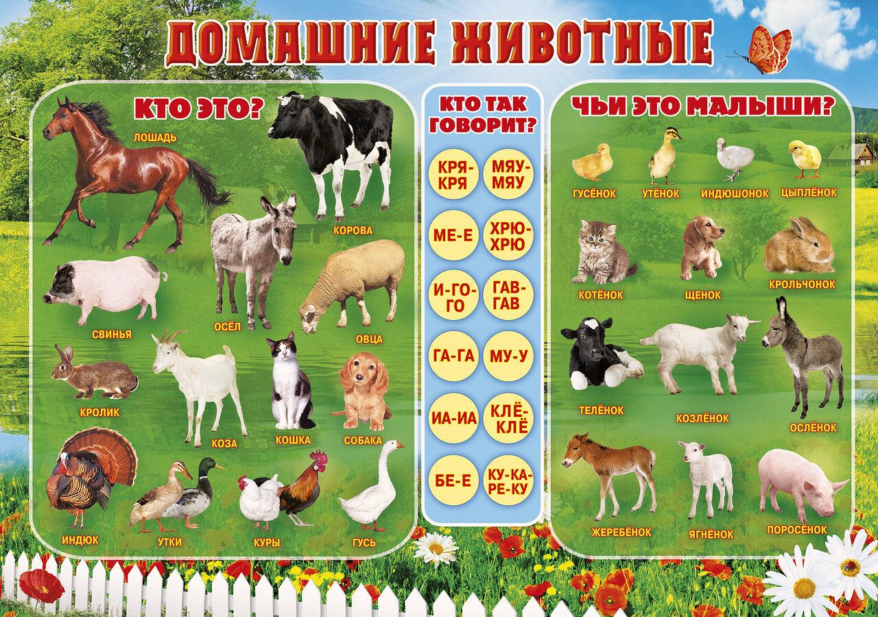 Картинки дикие животные для доу 8