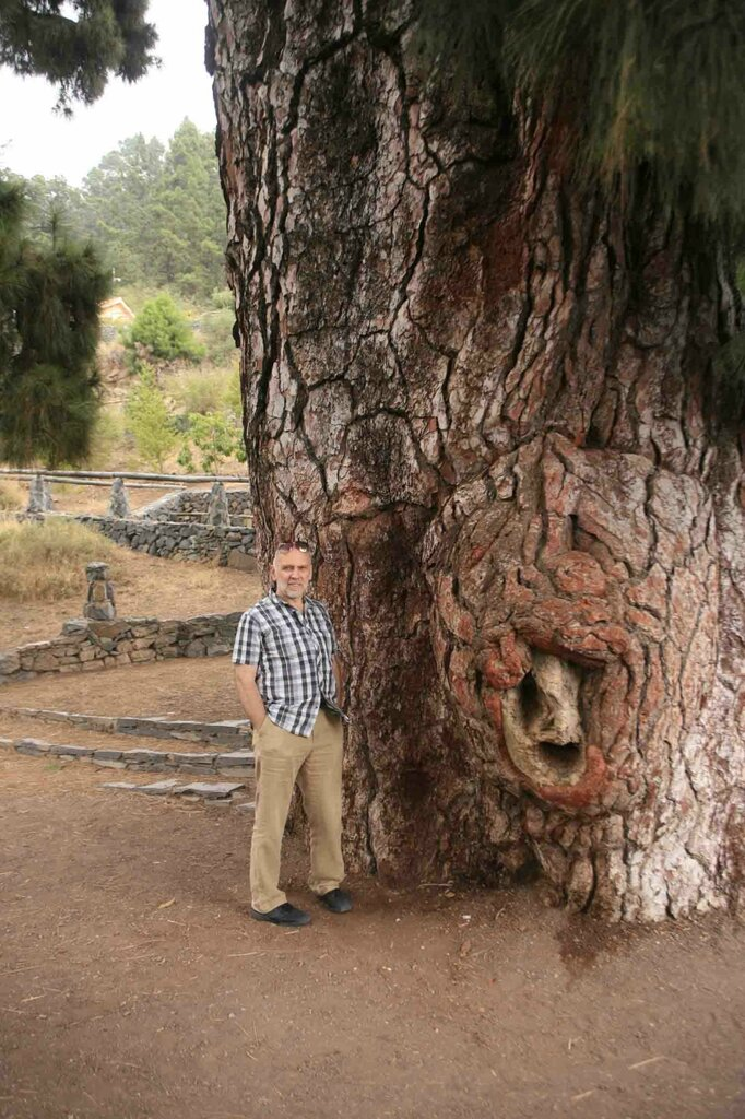 Константин Шульга, Тенерифе, большое дерево