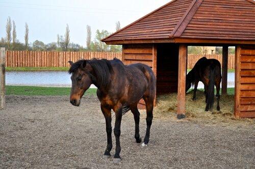 Травмы у лошадей тазобедренного сустава выскакивает плечевой сустав что делать