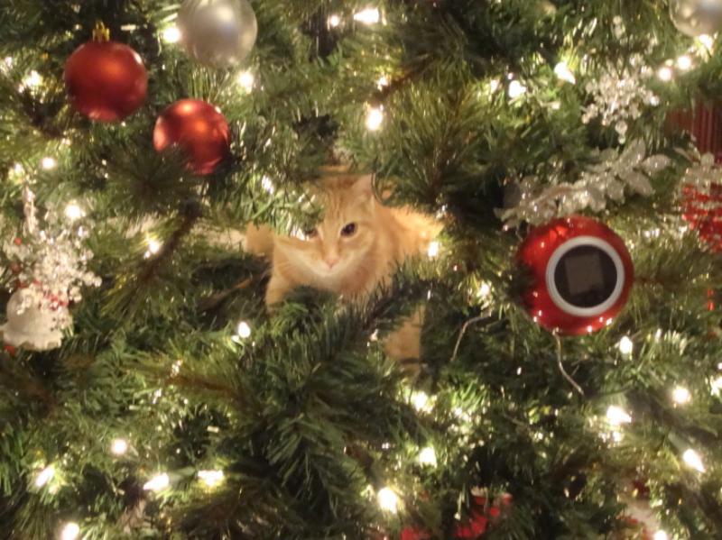 Коты на ёлке - фото 1
