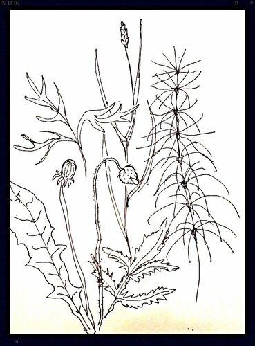листья цветов и трав