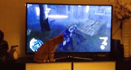 Загадка для кота - кто в мониторе живет?