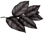 SkyScraps-Adore-Leaves4.png