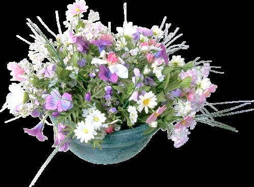 Полевые цветы на прозрачном фоне