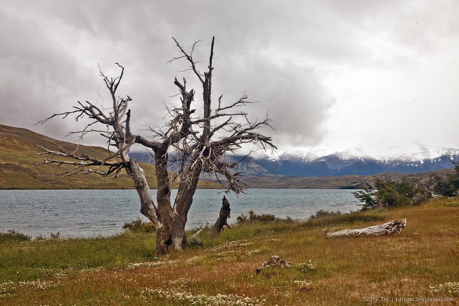 24. Восхождение к Голубым Башням и животный мир Южной Патагонии