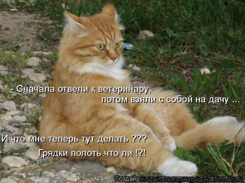 http://img-fotki.yandex.ru/get/5637/194408087.0/0_8d788_4b67ff6f_L.jpg