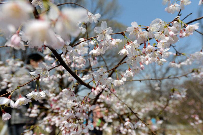 характеристикой линзы пекин весной март фотографии некоторым фоловерам